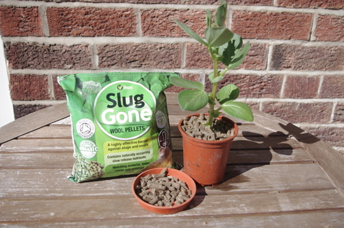wool pellets for slug defence